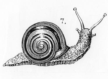 escargot Boussole Blog