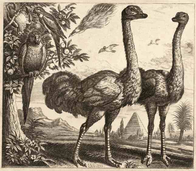 Wenceslas_Hollar_-_Two_ostriches