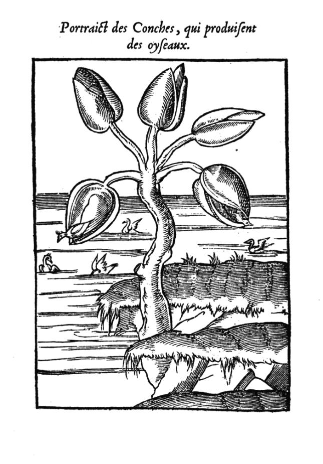 PLANT14