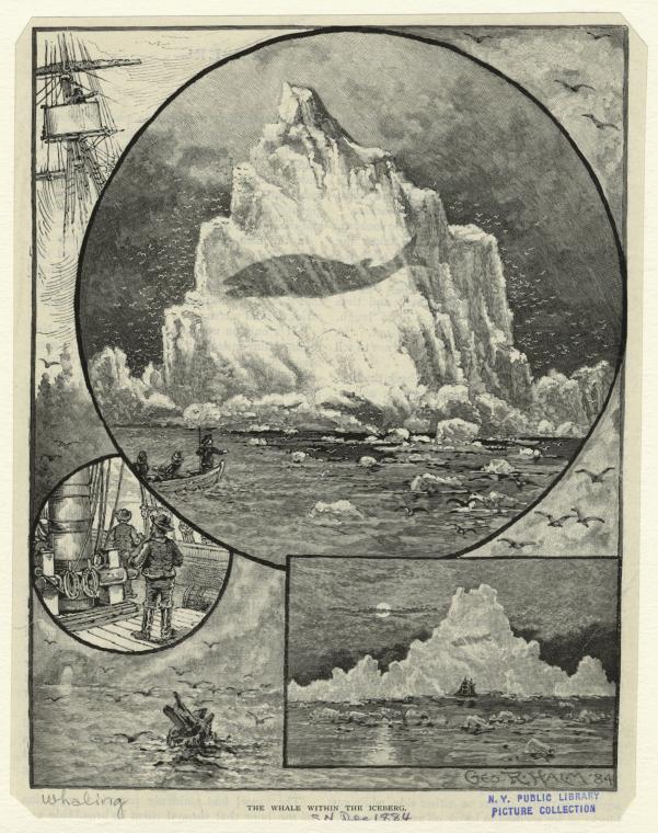 BALEINE ICEBERG