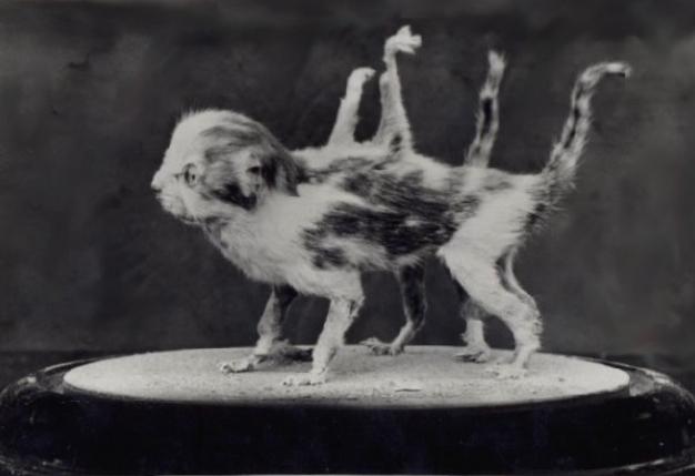 chat-huit-pattes2