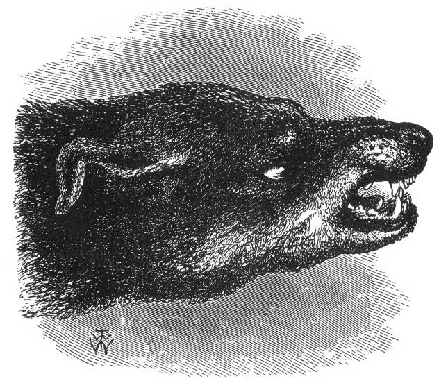 tete-de-chien